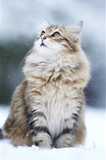 Preview iPhone wallpaper Winter snow cat, eyes looking away