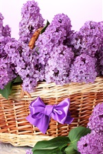 A basket of lilac flowers, bow, purple