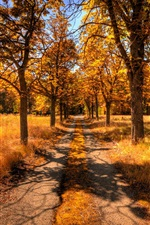 Preview iPhone wallpaper Autumn landscape, yellow tree leaves and grass, road