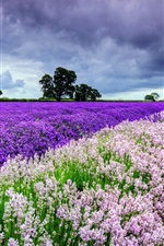 Preview iPhone wallpaper Beautiful the world of lavender, sky, clouds