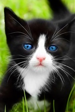 Preview iPhone wallpaper Black cat, blue eyes