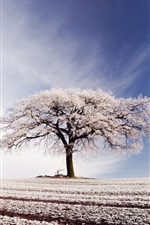 Preview iPhone wallpaper Broad field, lonely tree, blue sky, white clouds, frost