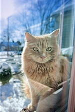 Preview iPhone wallpaper Cat in the window, snow winter