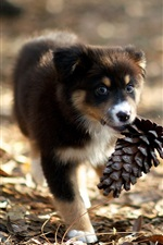 Preview iPhone wallpaper Cute puppy picking up pine cones