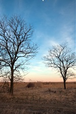 Preview iPhone wallpaper Dry autumn, bare trees, withered grass