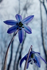 Preview iPhone wallpaper Flowers in the spring forest, snowdrops, macro photography