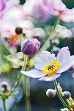 Preview iPhone wallpaper Flowers macro, anemones blurring focus photo