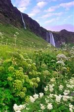 iPhone fondos de pantalla Mañana Islandia paisajes, montañas, la hierba y las flores, cascadas, lila cielo, nubes