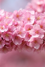 Preview iPhone wallpaper Japan sakura, twigs, pink flowers, petals close-up, blurred background