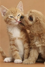 Preview iPhone wallpaper Kitten with puppy's friendship