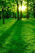 Preview iPhone wallpaper Park the morning sun, the green trees and grass