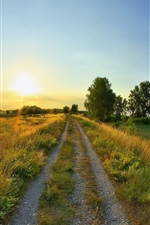 Preview iPhone wallpaper Road weeds, summer Sunrise