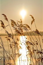Preview iPhone wallpaper The early morning riparian sunrise scenery, reed, fog, river