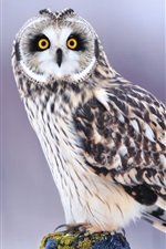 Preview iPhone wallpaper Winter owl eyes close-up, blurred background