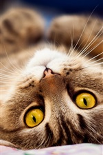 Preview iPhone wallpaper Yellow eyes cat lying on bed