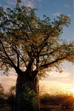 Preview iPhone wallpaper Africa, Zimbabwe, savanna nature landscape, baobab, shrubs, sunset, rays
