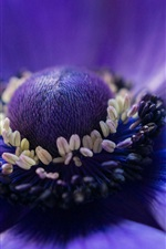 Preview iPhone wallpaper Anemone blue flower macro photography