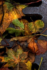 Autumn leaves on the ground close-up