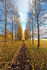Preview iPhone wallpaper Autumn trees road, yellow leaves