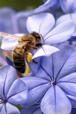 Preview iPhone wallpaper Blue flowers and bee close-up
