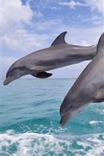Preview iPhone wallpaper Bottlenose dolphins, beautiful jumping, Bay Island of Honduras