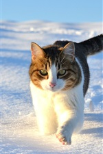 Preview iPhone wallpaper Cute cat walking in the snow winter