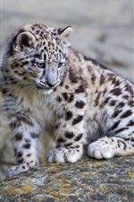 Preview iPhone wallpaper Cute snow leopard baby