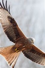 Preview iPhone wallpaper Eagle open wings freedom flying