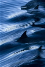 Preview iPhone wallpaper Long-nose dolphins, Gulf of California, Mexico