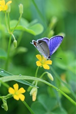 Preview iPhone wallpaper The breath of spring, yellow wildflowers and blue butterfly