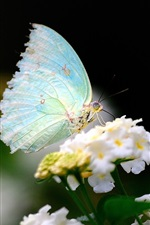 Preview iPhone wallpaper The spring Butterfly and flowers close-up