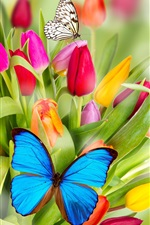 Preview iPhone wallpaper Tulip flowers and butterfly