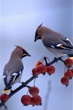 Two birds standing in the berries tree branch