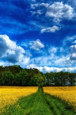 Preview iPhone wallpaper Beautiful scenery, fields, rape flowers, trees, blue sky and white clouds