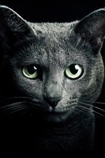 Preview iPhone wallpaper Black cat, green eyes, black background