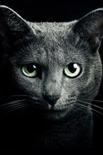 미리보기 iPhone 배경 화면 검은 고양이, 녹색 눈, 검은 배경에