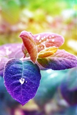 Preview iPhone wallpaper Blue-purple leaves, the morning dew