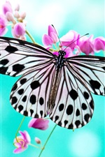 Preview iPhone wallpaper Butterfly love purple flowers
