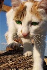 Preview iPhone wallpaper Cat coming, make way