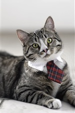 Preview iPhone wallpaper Cat wearing a tie