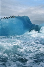 Preview iPhone wallpaper Cold arctic, blue ice and sea water, penguins