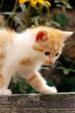 Preview iPhone wallpaper Cute kitten walking