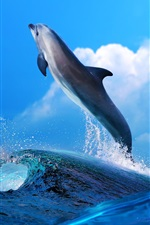 Preview iPhone wallpaper Dolphin beautiful dance, sea waves splash