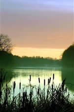 Preview iPhone wallpaper Early morning lake scenery, mist, reeds, trees