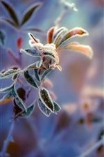 Preview iPhone wallpaper Frost leaves close-up, blurred background