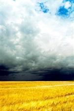 Golden wheat fields, clouds sky, storm coming