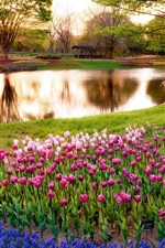 Preview iPhone wallpaper Japan, Tokyo, morning scenery in the park, sunrise, pond, trees, flowers
