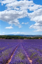 Preview iPhone wallpaper Lavender of Provence, France