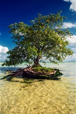 Preview iPhone wallpaper Mayan Riviera, Mexico, one tree in the sea water