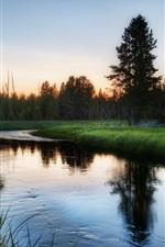 Natureza floresta, grama, rio, amanhecer